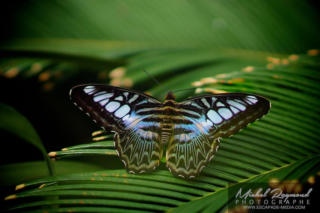 Papillon de la volière de la ferme Guyon
