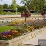 Fleurs place publique vieux saint-jean