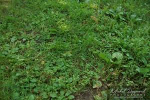 photo peloude prise par un enfant